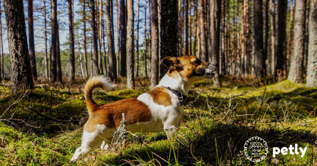 The 15 Most Athletic Dog Breeds
