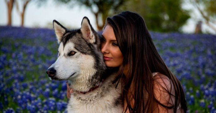Tips for Husky owners