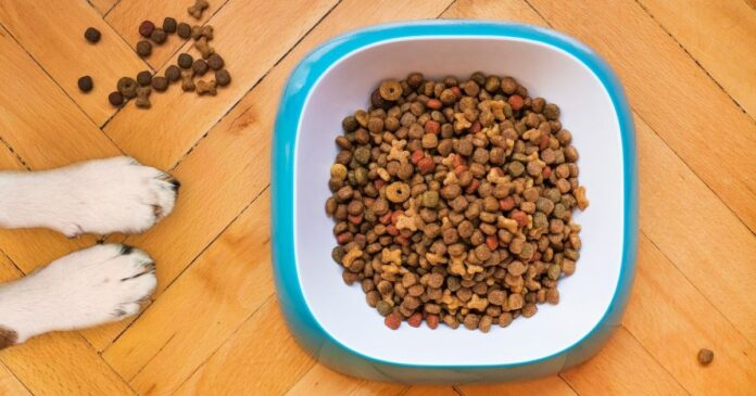 What are the best dry foods for puppies in 2021?