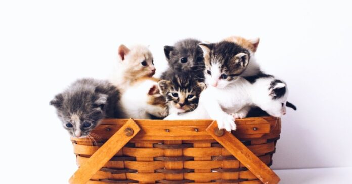 What are the best cat breeds for first-time cat owners?