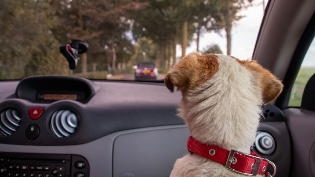 What to include in a dog car emergency kit?