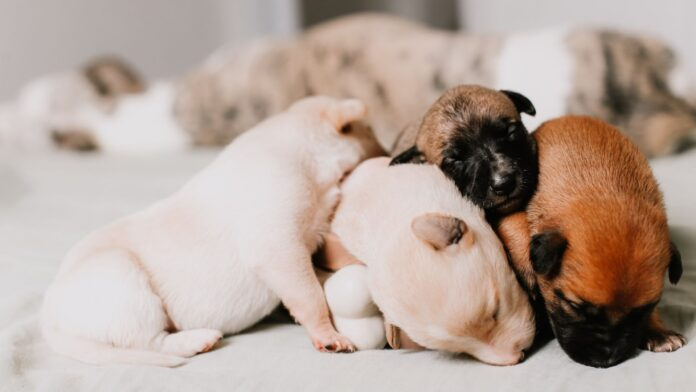 How to take care of newborn puppies step by step
