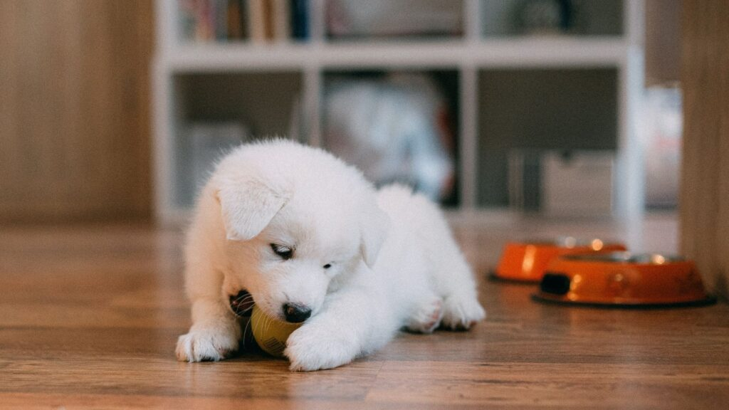 How to take care of newborn puppies