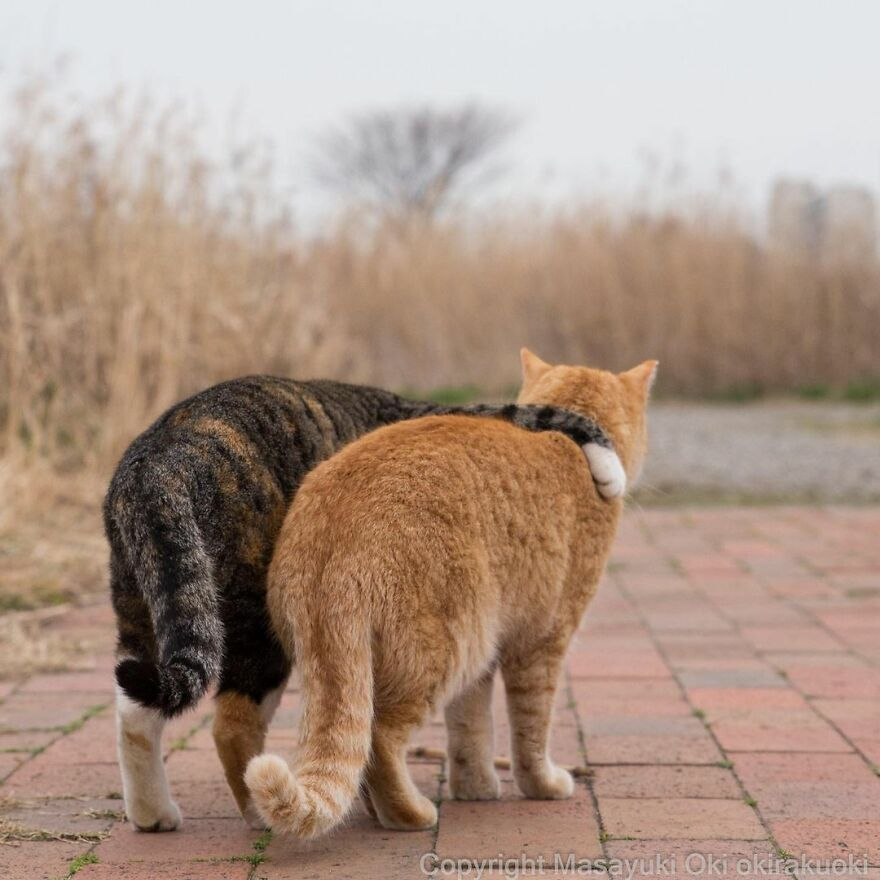 Two cats loving each other