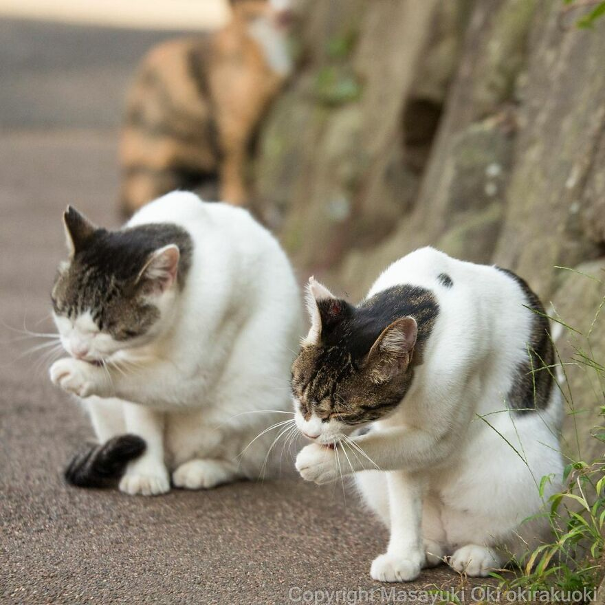 Stray cats in Japan