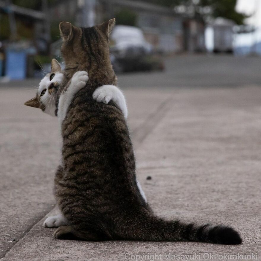 Cute & funny pictures of cats