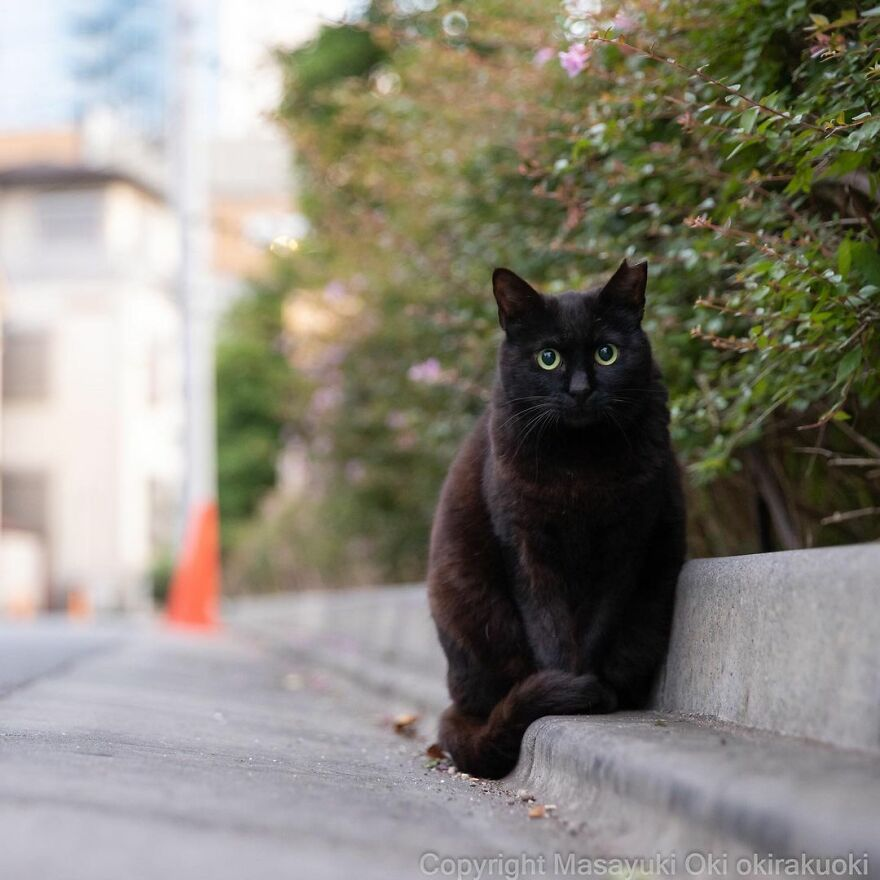 Cute Stray cats in Japan