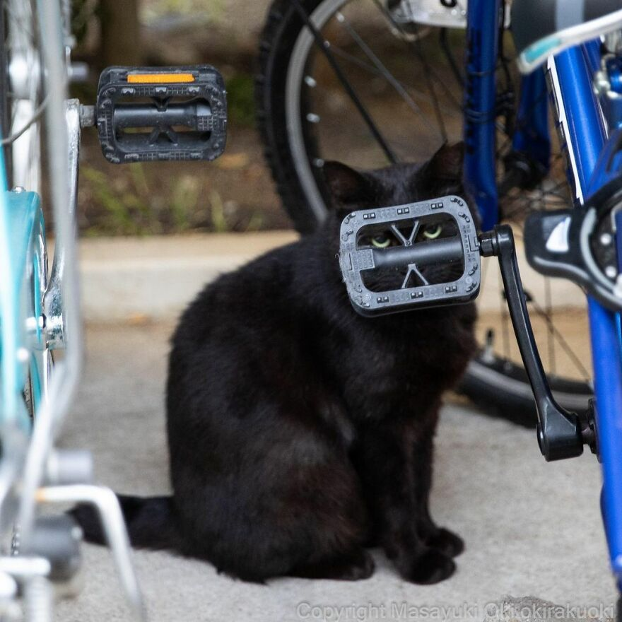 Black cat looking from bicycle
