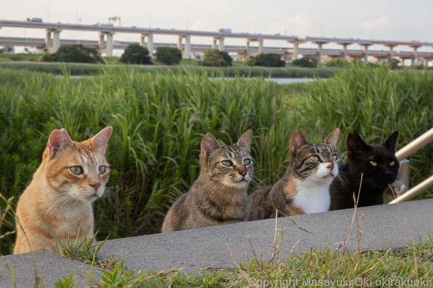 Stray cats images in Japan