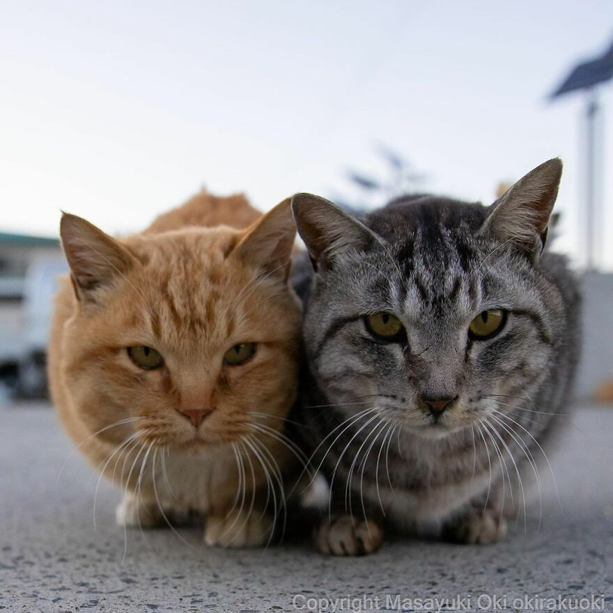 two cats in one image