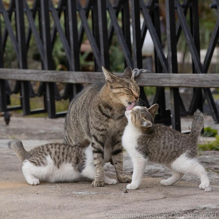 amazing lovely cats