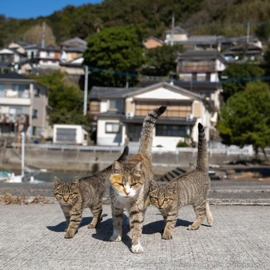 Amazing Cute & funny pictures of Stray cats