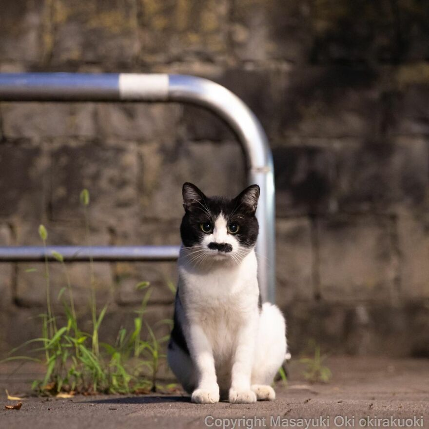 Cute & funny pictures of Stray cats