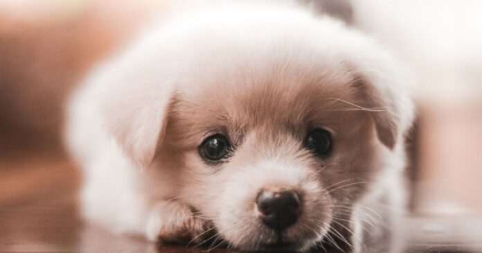 Best Names for Dogs with the meaning